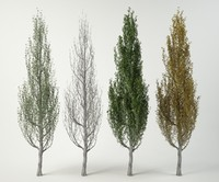 3d white poplar plant