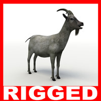 3d model of goat rigged