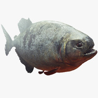 scary predator fish 3d model