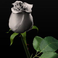 obj white rose