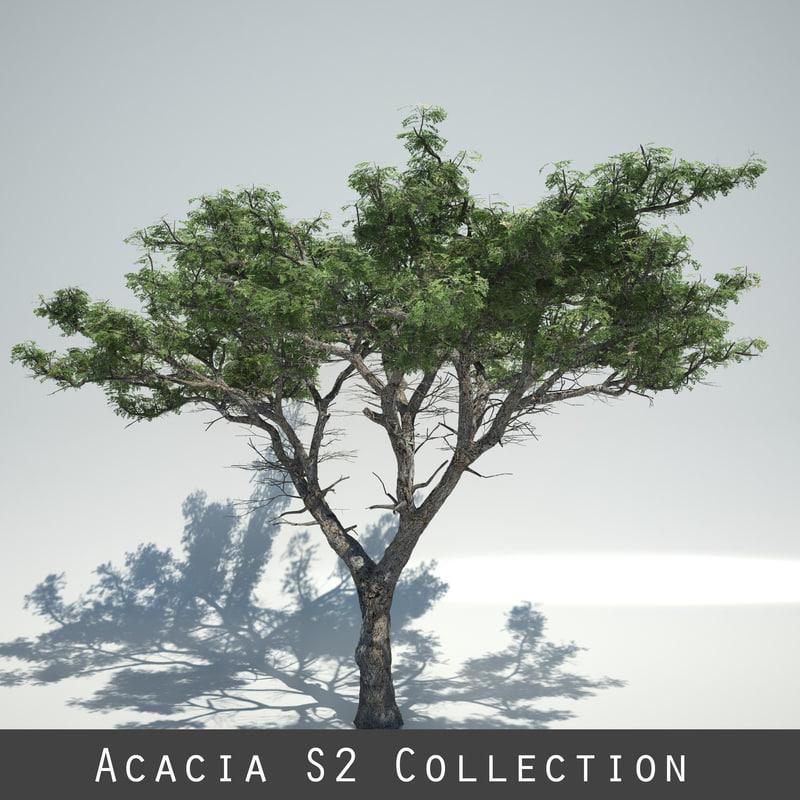 AcaciaS2_Collection_Signature.jpg