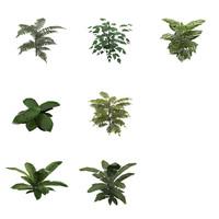 ready plants 3d ma