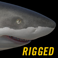 Maya white shark rigged