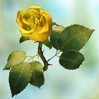 3d model of yellow rose