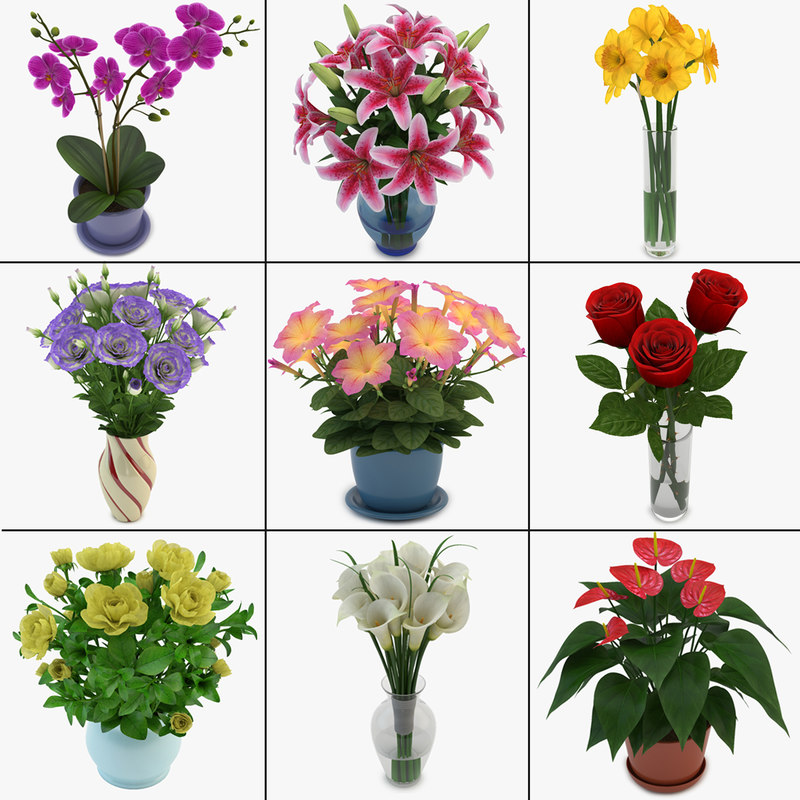 Bouquets_and_Flowers_in_Pot.jpg