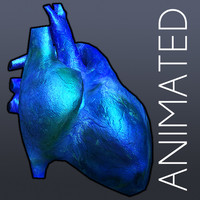 3d model heart anatomy cycle animation