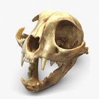 Cat Skull 3D Scan