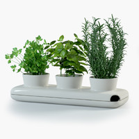 Herbs in Sagaform Pot