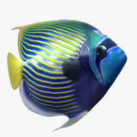 3d emperor angelfish model