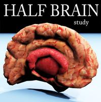 Half brain medium polygons