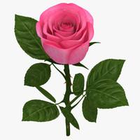 rose branch pink 3d model