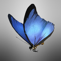 3d model butterfly wings