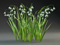 obj flower leucoium