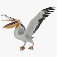 3d model pelecanus erythrorhynchos american white