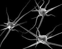 3ds 3 neurons