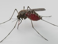 3ds max mosquito animate sting