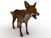 3d red fox model