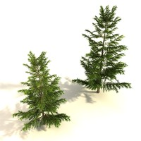 maya set pine trees polygonal