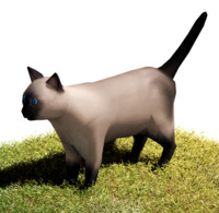 obj siamese cat