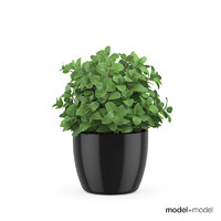 mint pots accessories 3d model