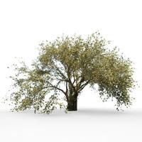 fantasy tree leaf 3d model