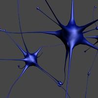 human neurons 3d model