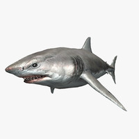 realistic great white shark 3ds
