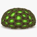 Honeycomb Coral 3D models
