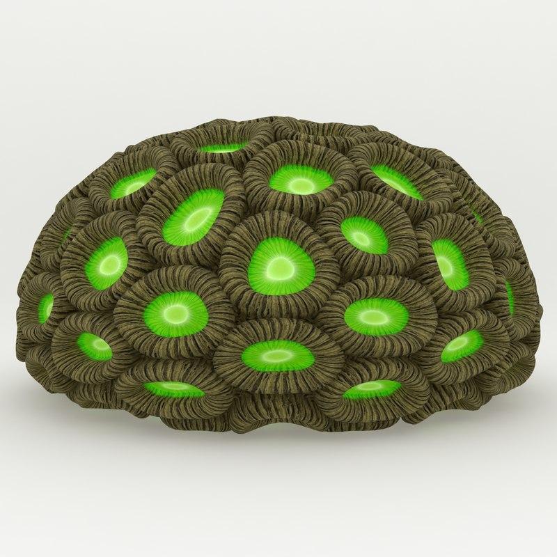 Honeycomb-Coral_Rr_02.jpg