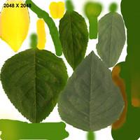 mustard plants 3d model