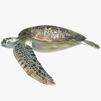 3d model of realistic sea turtle