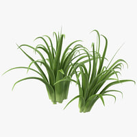 3d shrub dracaena