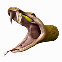 3d model of snake head
