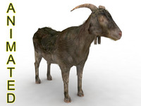 3d goat joint model