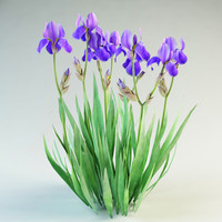 3ds iris germanica