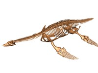 3d model plesiosaur skeleton bones