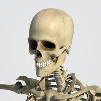 3d model human rigged
