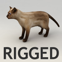 Siamese cat rigged model