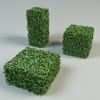 boxwood bush topiary
