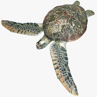 3d realistic sea turtle pose