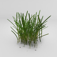 photorealistic grass 3d model