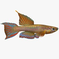 3d model killifish 1