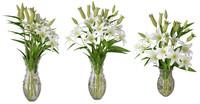 3d lily vase model