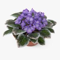 Violets Plant
