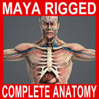 MAYA RIGGED Complete Male Anatomy PACK
