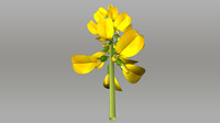 3d crotalaria plants