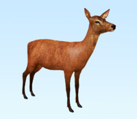 deer hind red 3d model