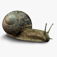photo-realistic snail 3d ma