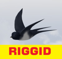 3d swallow bird