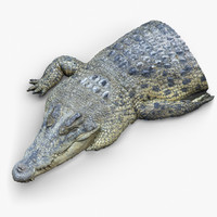 Crocodile Fragment 3D Scan